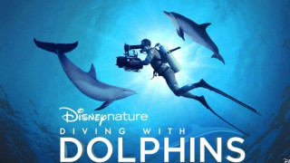 Diving with Dolphins (2020) Full Movie - HD 720p
